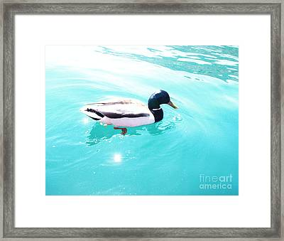 Framed Print featuring the photograph Pato by Vanessa Palomino