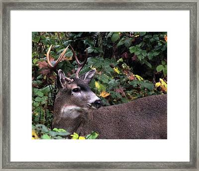 Framed Print featuring the photograph Patriarch by I'ina Van Lawick