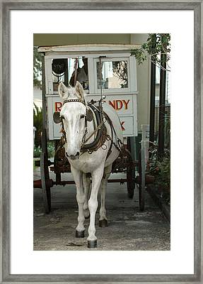 Patsy The Mule Framed Print by Pam Kaster