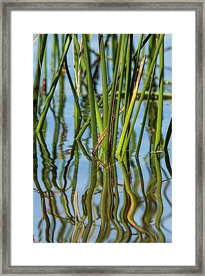 Patterns Amid The Reflection Of Reeds Framed Print by Michael Qualls