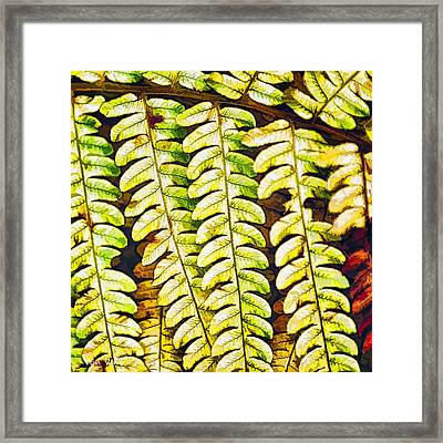 Patterns In Cinnamon Fern Framed Print