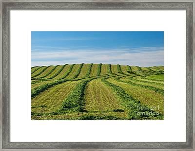 Patterns In Cut Fields Framed Print by Richard and Ellen Thane