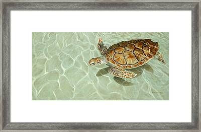 Patterns In Motion - Portrait Of A Sea Turtle Framed Print by Dreyer Wildlife Print Collections
