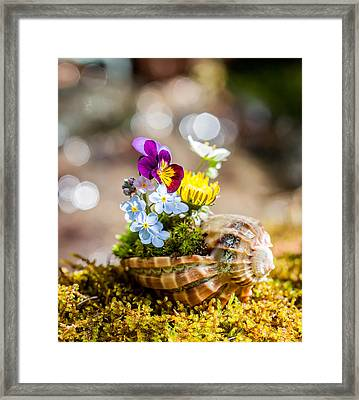 Patterns In Nature Framed Print by Aaron Aldrich