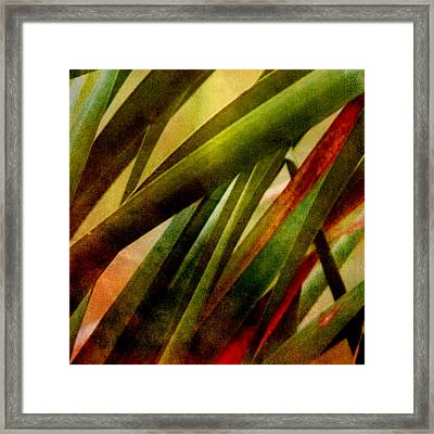 Patterns In Nature No.3 Framed Print by Bonnie Bruno