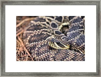 Patterns Framed Print by JC Findley