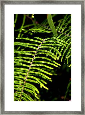 Framed Print featuring the photograph Pauched Coral Fern by Miroslava Jurcik