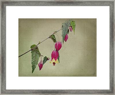 Paulette Framed Print by Elaine Teague
