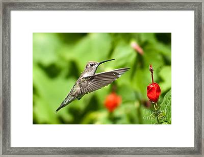Pause In Motion Framed Print by Charles Dobbs