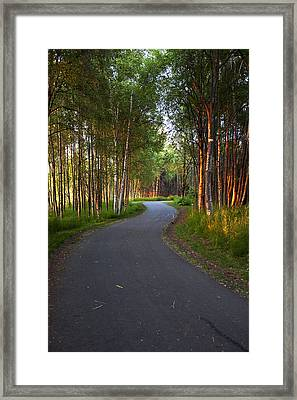 Paved Path Winding Through The Forest Framed Print