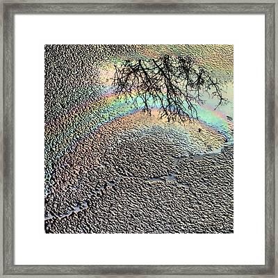 Pavement Rainbow  Framed Print by Denise Keegan Frawley