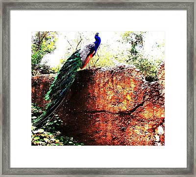 Framed Print featuring the photograph Pavoreal by Vanessa Palomino