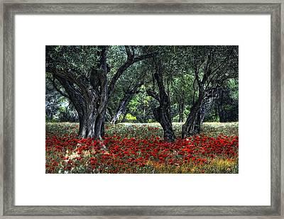 Pavot De Provence Framed Print by Joachim G Pinkawa