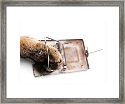 Paw In Mousetrap Framed Print by Sinisa Botas