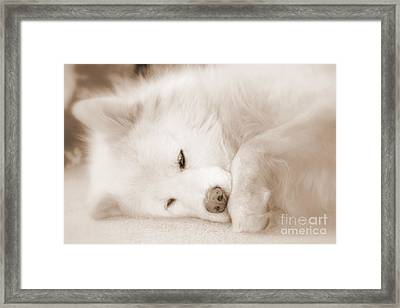 Pawsome Framed Print by Fiona Kennard