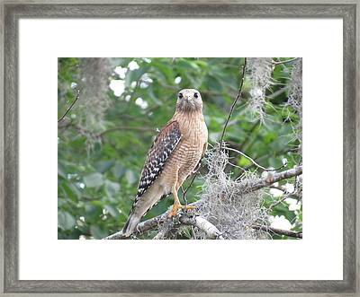 Framed Print featuring the photograph Pay Attention by Fortunate Findings Shirley Dickerson