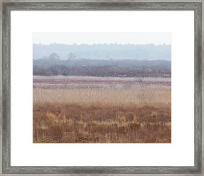 Framed Print featuring the photograph Paynes Prairie White Birds by Paul Rebmann