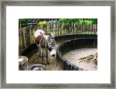 Framed Print featuring the photograph Paz by Jon Emery