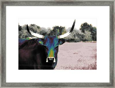 Pazzo Framed Print by Molly McPherson