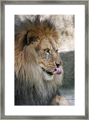 Framed Print featuring the photograph Pbbbt by Judy Whitton
