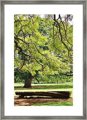 Peace And Solitude Framed Print by Craig Wood