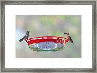 Peace At The Feeder Framed Print by Lynn Bauer