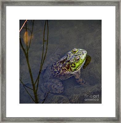 Peace Frog Framed Print