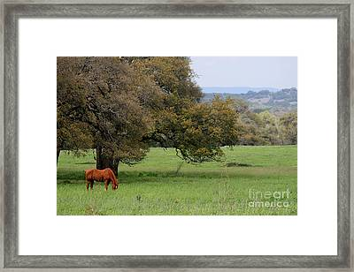 Peace In The Hill Country Framed Print