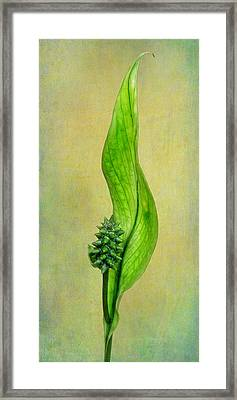 Peace Lily Framed Print by David and Carol Kelly