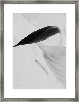 Peace Lily  Framed Print by Tara Miller