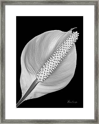 Peace Lily Framed Print