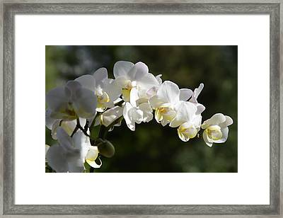 Peace Love Happiness 1 Framed Print