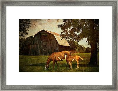 Peace Of Country Living Framed Print