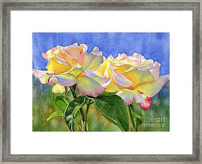 Peace Roses With Blue Background Framed Print by Sharon Freeman