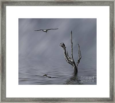 Peace Framed Print by Shirley Mangini