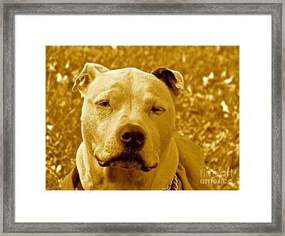 Peace To End Dog Fighting Framed Print by Q's House of Art ArtandFinePhotography