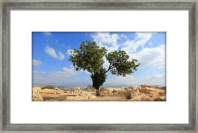 Peace Tree Framed Print by Stephen Stookey