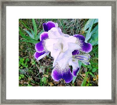 Peace With Flare Framed Print by Tracey Griffor