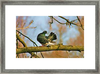 Peaceful And Beautiful Framed Print by Valia Bradshaw