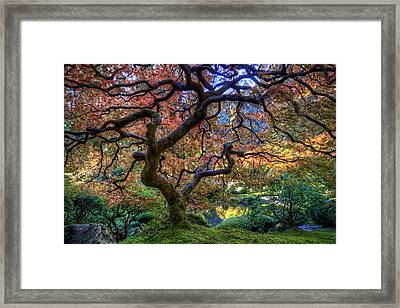 Peaceful Autumn Morning Framed Print