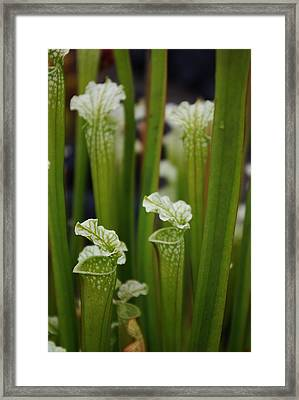 Peaceful Carnivore Framed Print by Ken Dietz