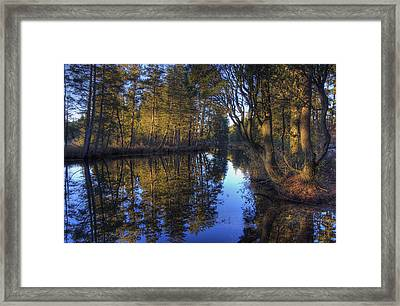 Peaceful Cedar Framed Print