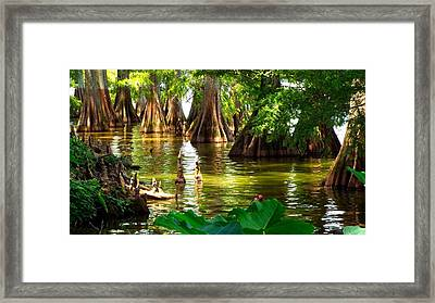 Peaceful Cypress Trees  Framed Print
