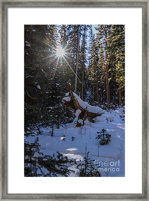 Peaceful Forest Framed Print