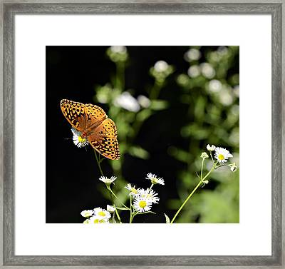 Peaceful Forest Framed Print by Susan Leggett