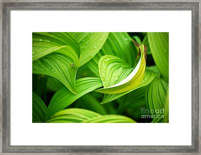 Peaceful Green Framed Print