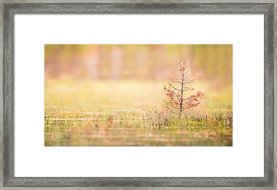 Peaceful Framed Print by Janne Mankinen