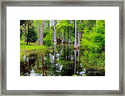 Peaceful Lake Framed Print by Carey Chen