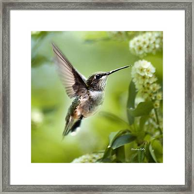 Peaceful Love Hummingbird Square Framed Print