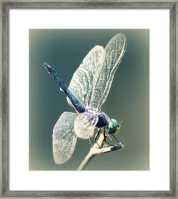 Peaceful Pause Framed Print by Melanie Lankford Photography